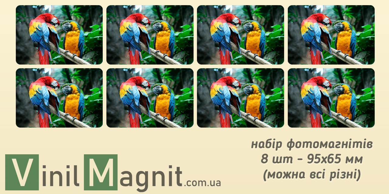 Набір фото магнітів 95*65 мм